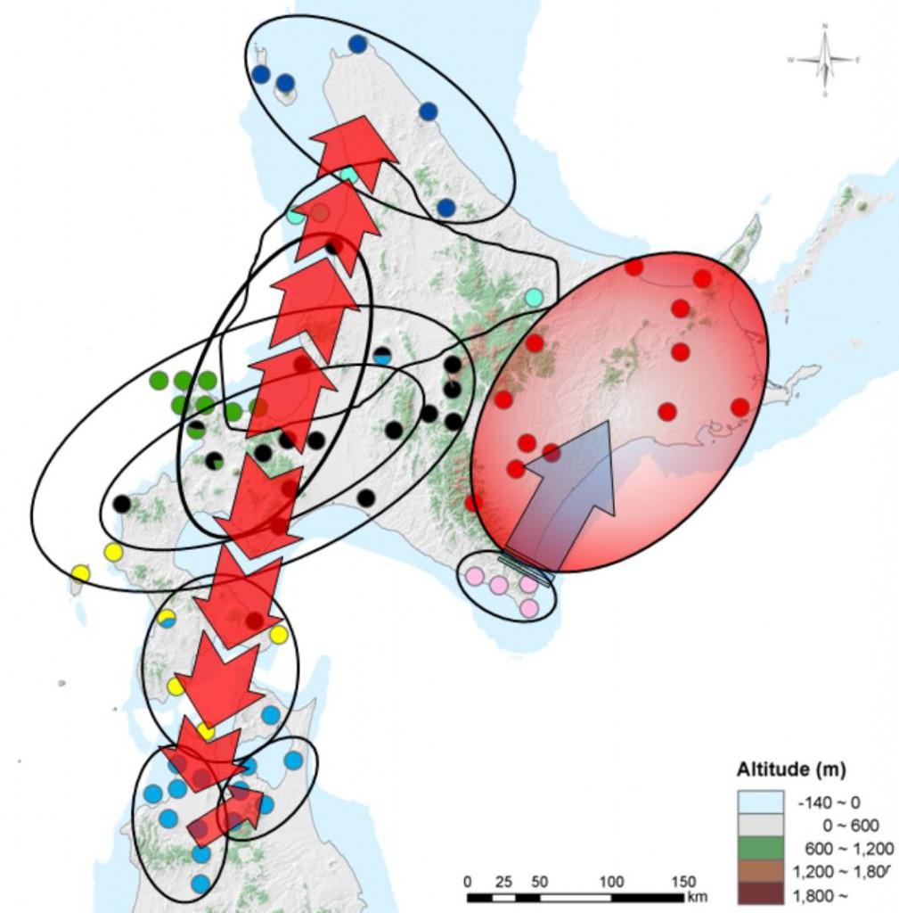 配偶システム - Mating system -...