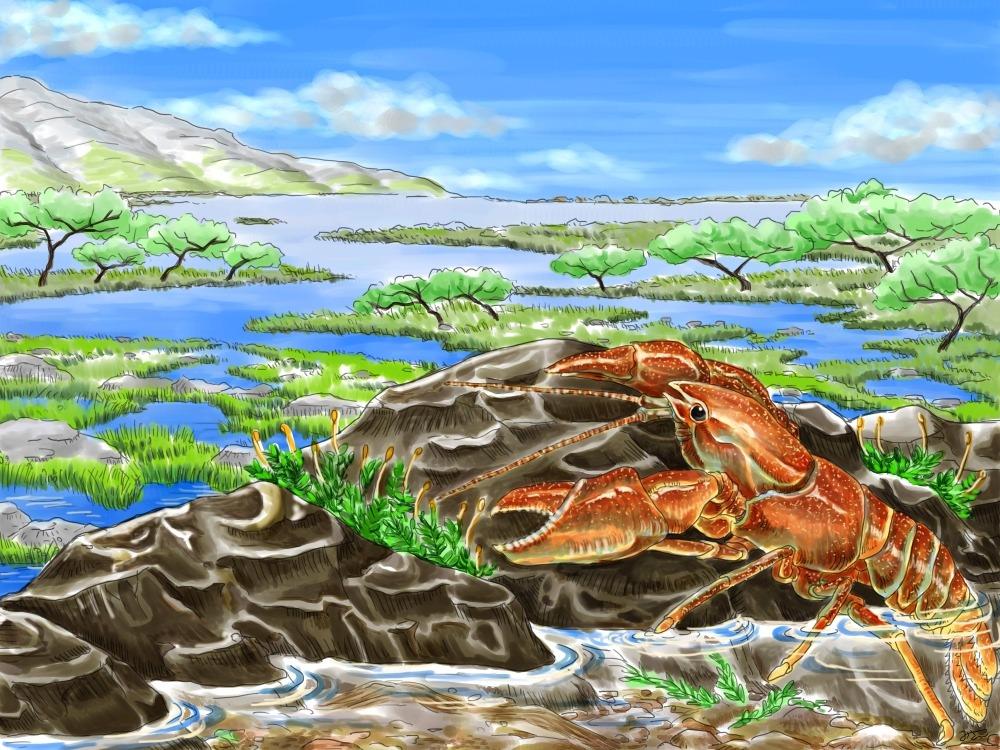 crayfishTsugaru